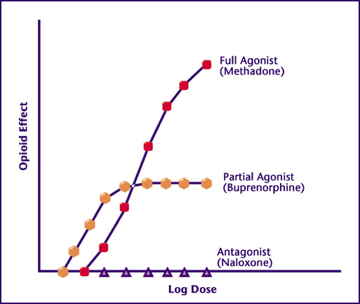 Illustration of relative strength of methadone compared to buprenorphine